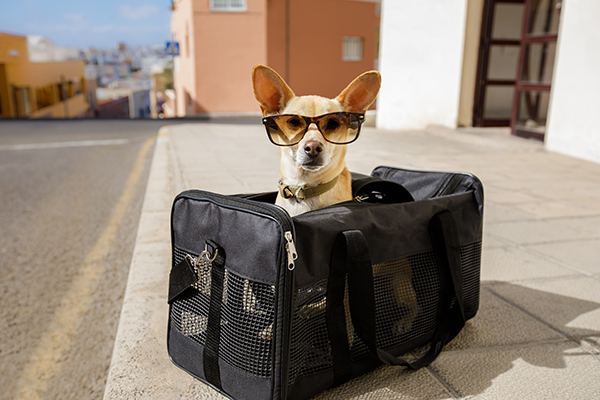 What to Know About Flying With a Dog — Safely