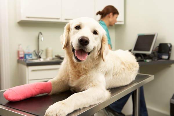 8 Ways to Find Affordable Vet Care For Your Dog