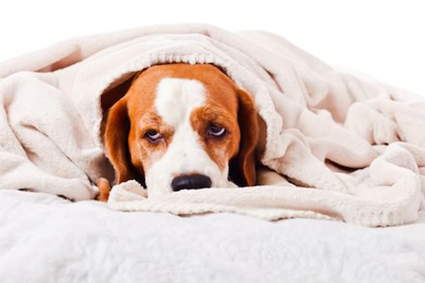 Imodium for Dogs — Is It Okay to Give Your Dog OTC Human Medicine for His Upset Stomach?