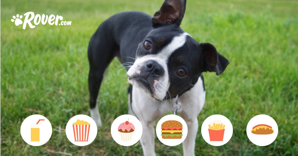 Can My Dog Eat Dairy?