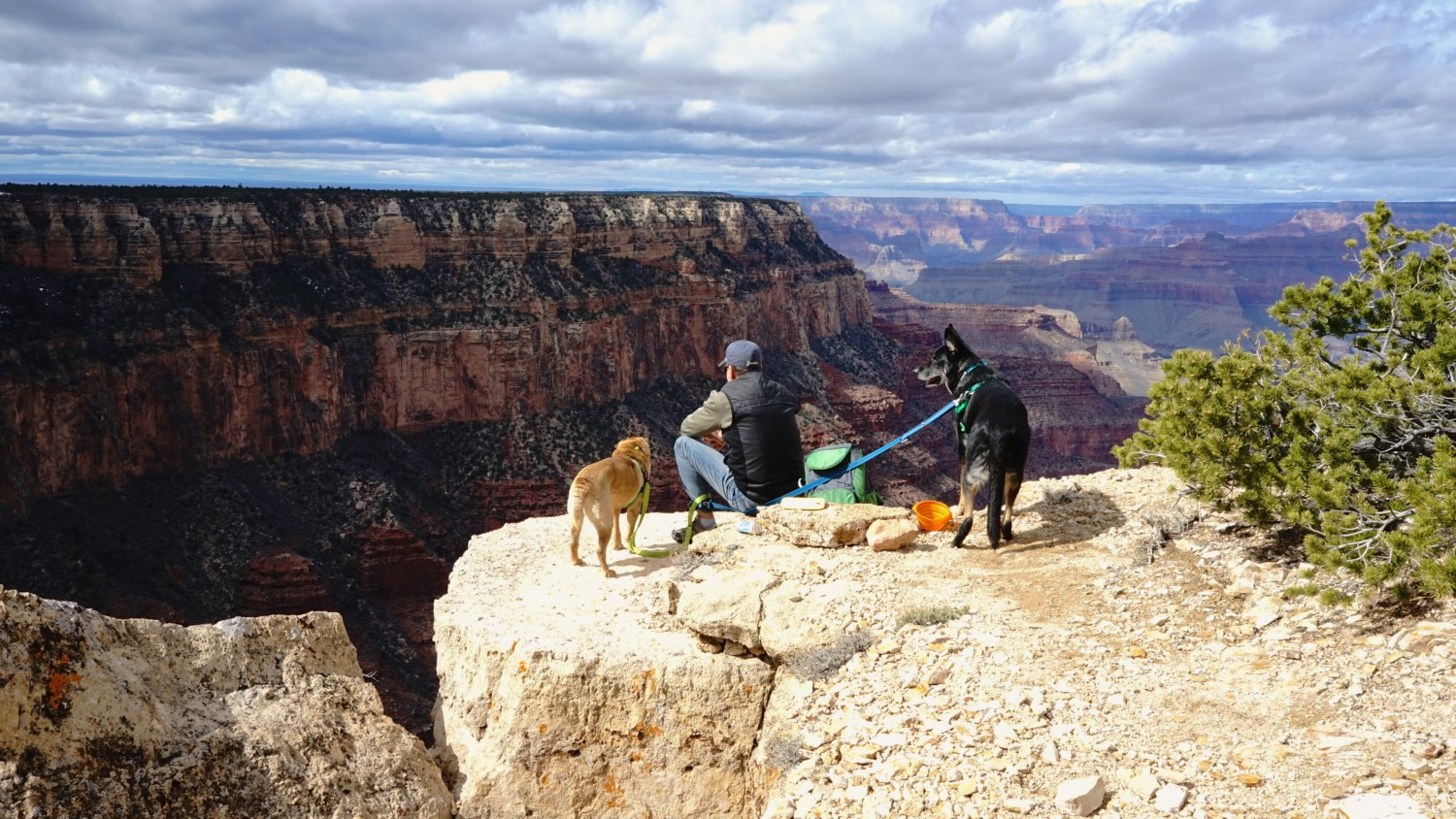 UPDATED: Best Dog Friendly National Parks in The US