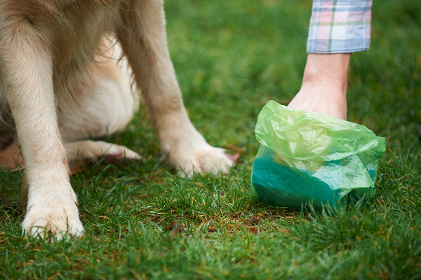 Should You Worry About Yellow Dog Poop?