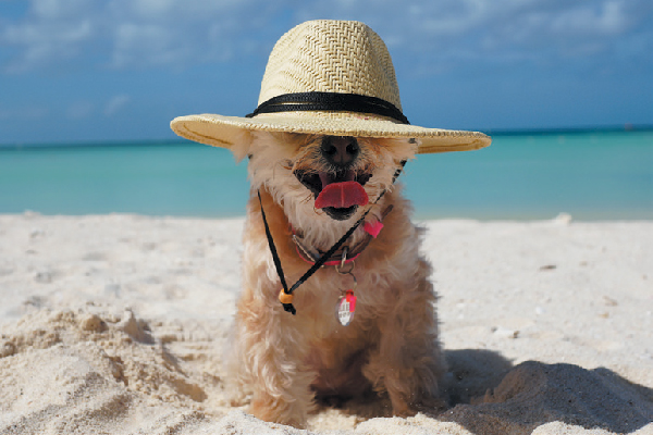 Take a Dog-Friendly Vacation to the Ritz-Carlton, Aruba