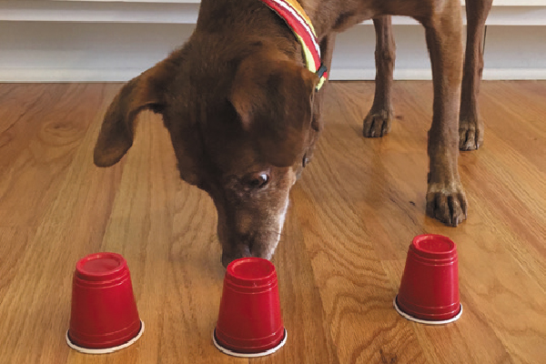 3 Indoor Dog Games to Play When You're Stuck Inside