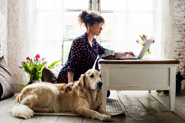 Pet Tech Products: What We Have, What We Know and What's Next