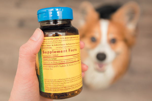 5 Dog Supplements You Must Know About