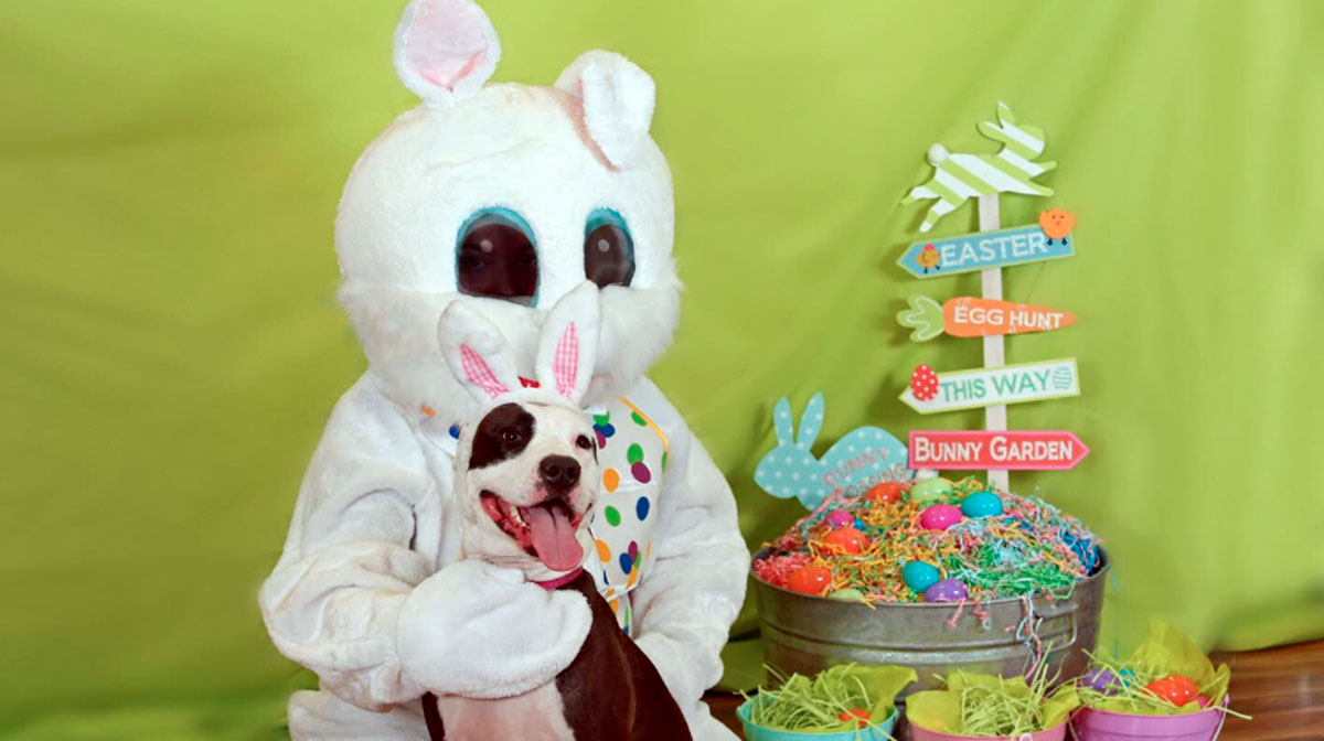 These 10 Dogs Are So Jazzed to Meet the Easter Bunny