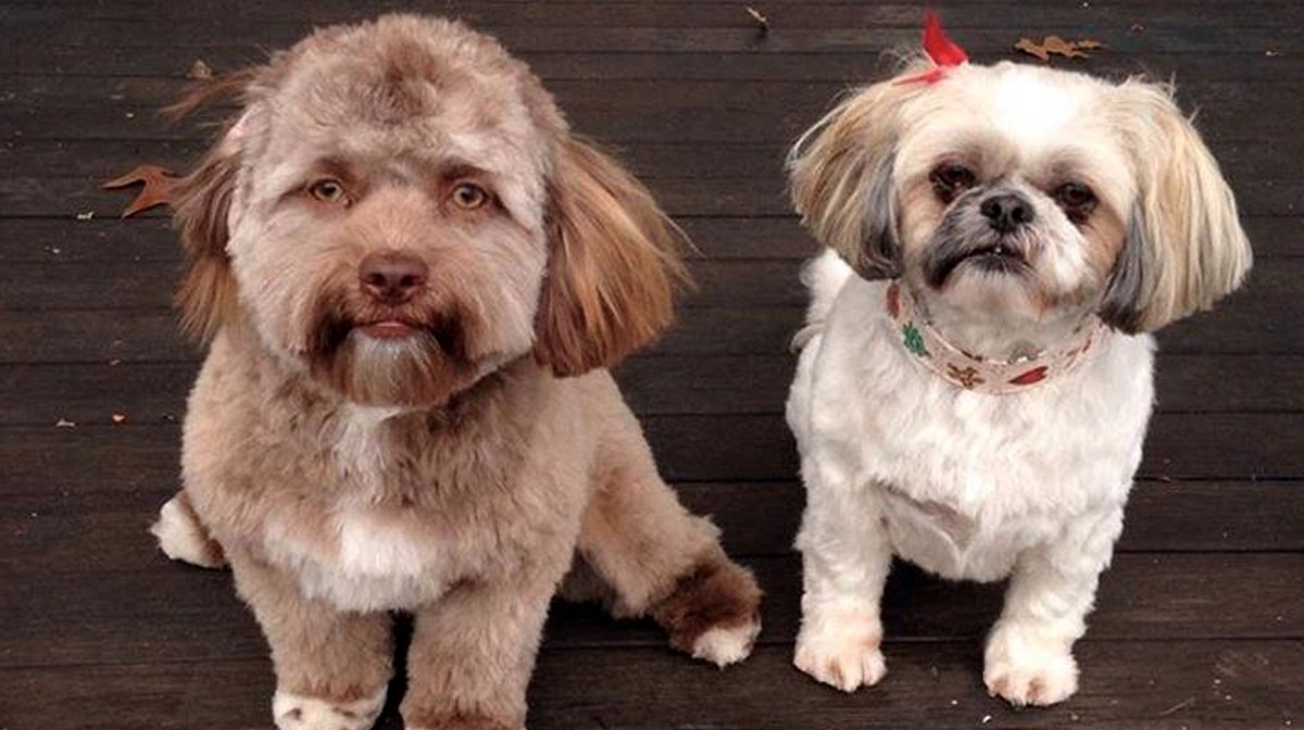12 Cute Dogs with Nearly  Human Faces