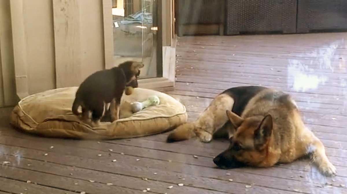 This Mama Dog Isn't about to Let Puppy Finish Nap Early [Video]