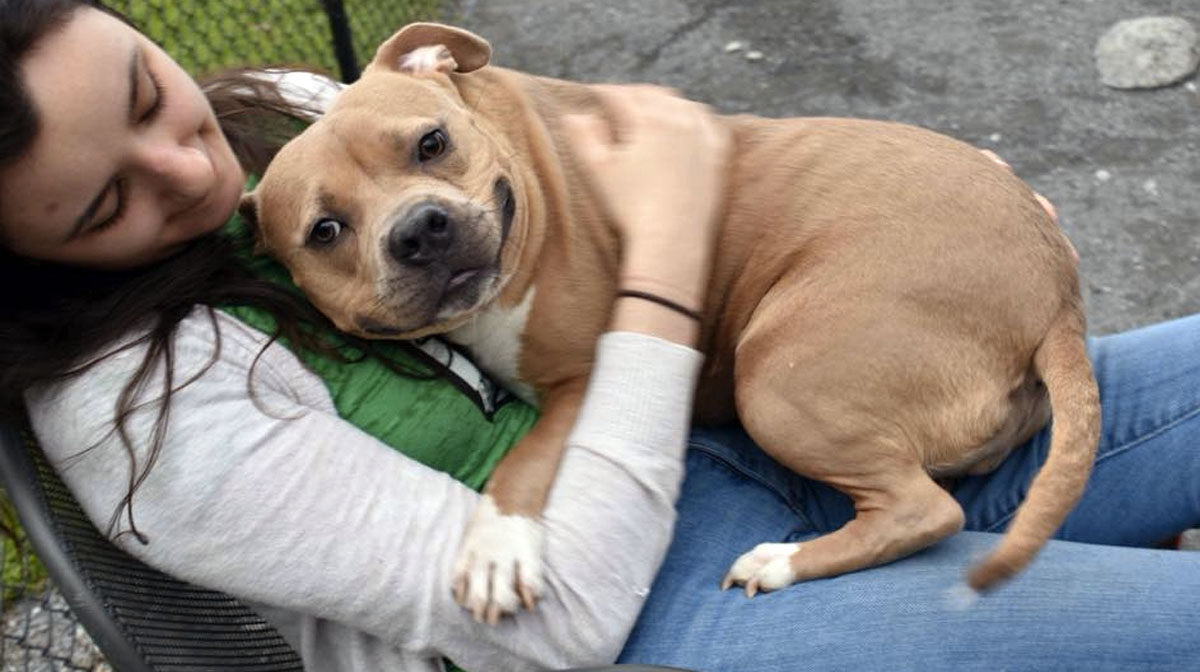 Dog Returned to Shelter For Being 'Too Nice' Goes Viral, Finds Perfect Family