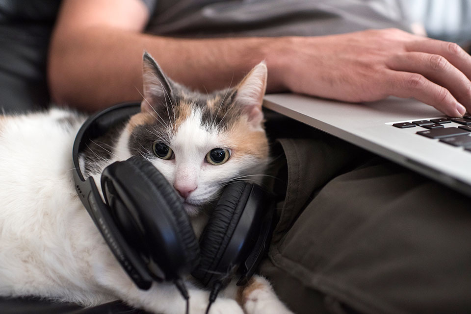 The Best Podcasts for Dog and Cat People