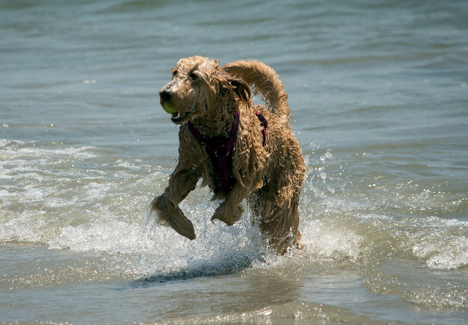 Holiday plans that are utterly unsuitable for dogs