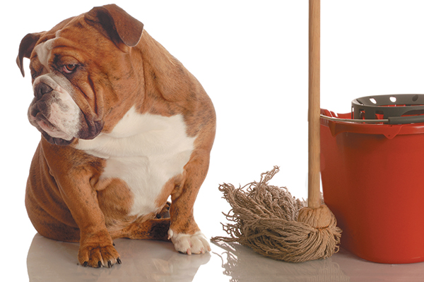6 Reasons Cleaning With Vinegar is Good For Your Dog And Your Home
