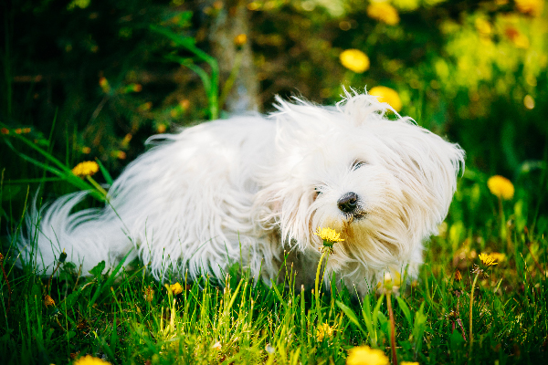 Everything to Know About Allergic Reactions in Dogs