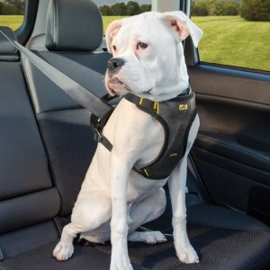 Why Using A Harness Is Better For Your Dog?