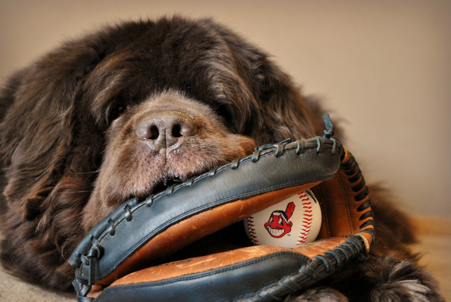 Dog Friendly Baseball Games – 2018 Schedule