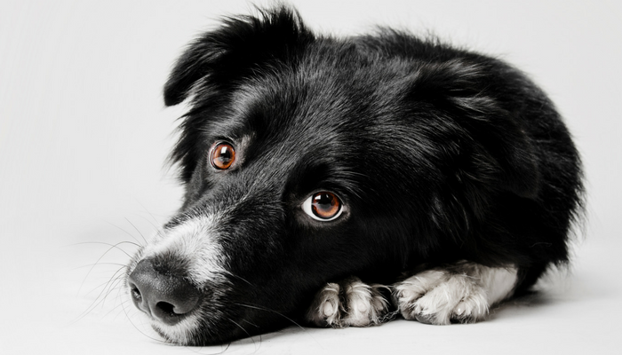 21 Human Foods That Are Toxic to Dogs