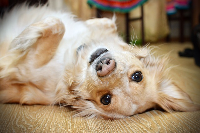 3 Surprising Ways Dogs Make Us More Optimistic