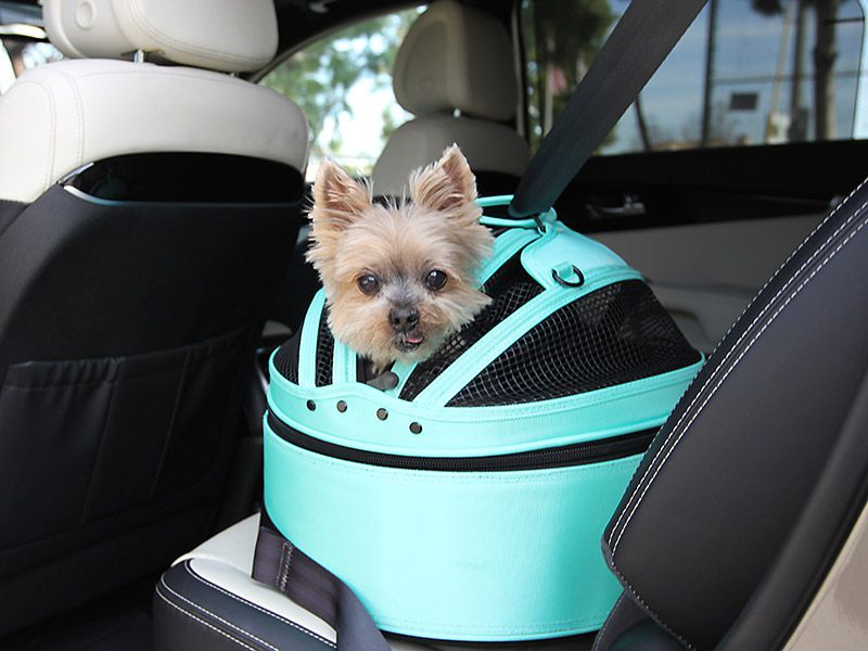 Here's Why the Top-Rated Dog Car Crates Could Save Your Dog's Life