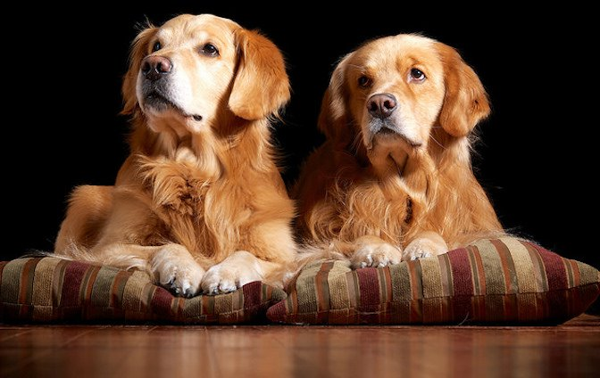 Would You Clone Your Dog? (People Totally Do)