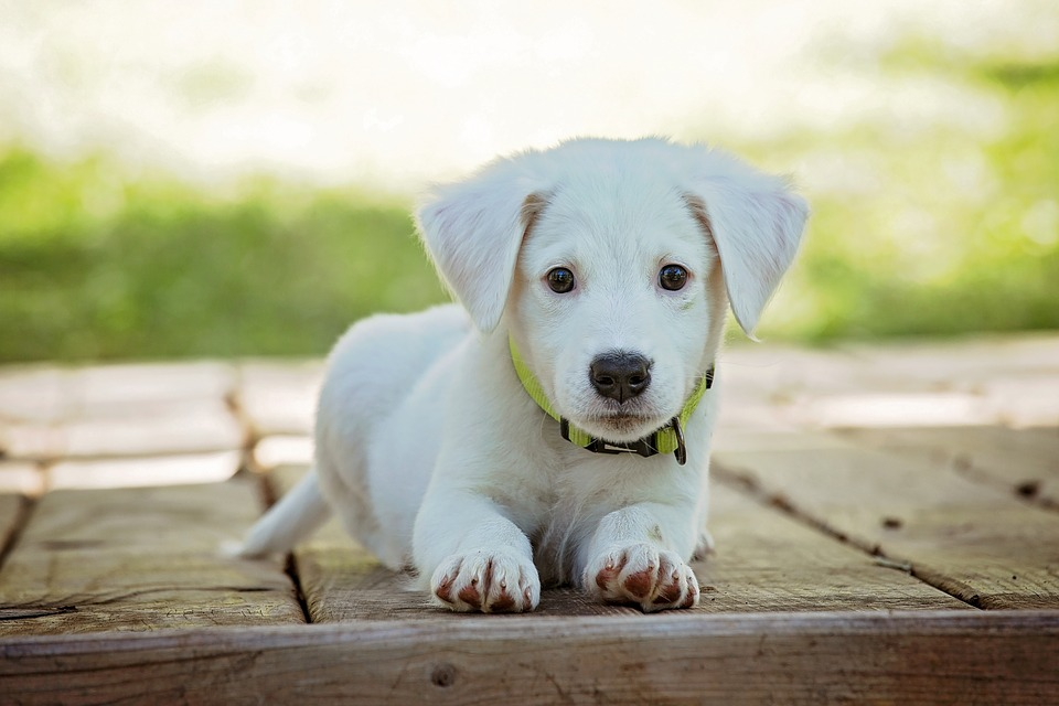 The 4 Best Flea Treatments that All Puppy Owners Need to Know