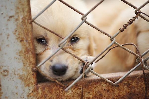 Ending the Dog Meat Trade: How Far We've Come and How Far We Have Left to Go