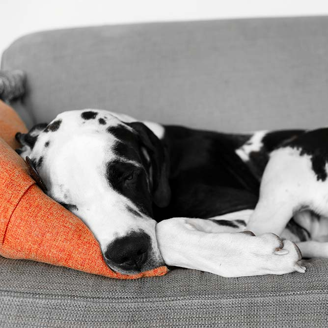 Best Dogs for City Apartments: Why the Size of Your Pet Doesn't Matter