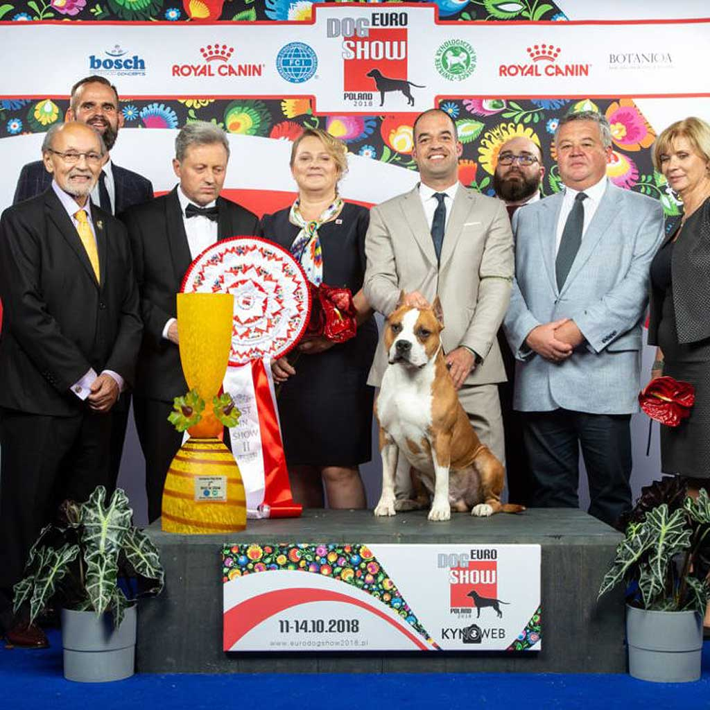 A Spanish Dog, 2nd Best Position at The European Dog Show in Warsaw