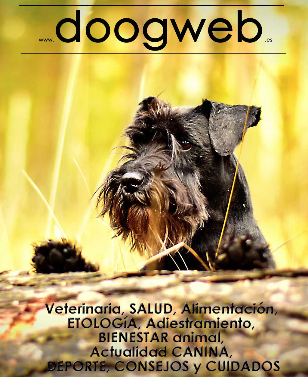 Free magazine doogweb nº 72, September 2018