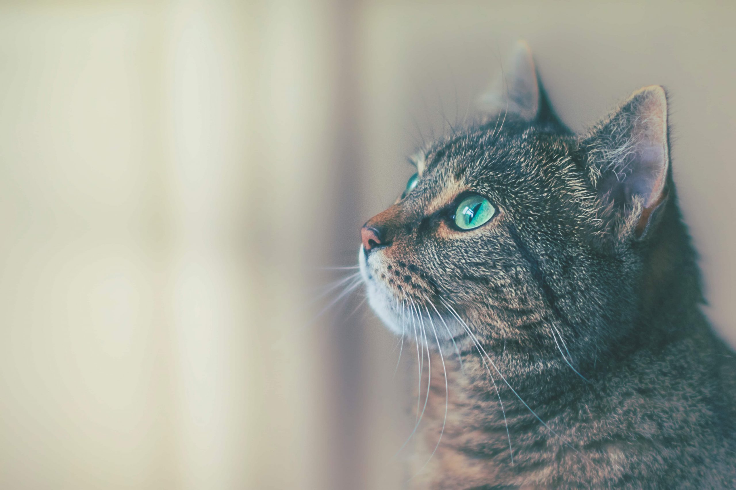 5 Things Your Cat Tries to Tell You … Desperately