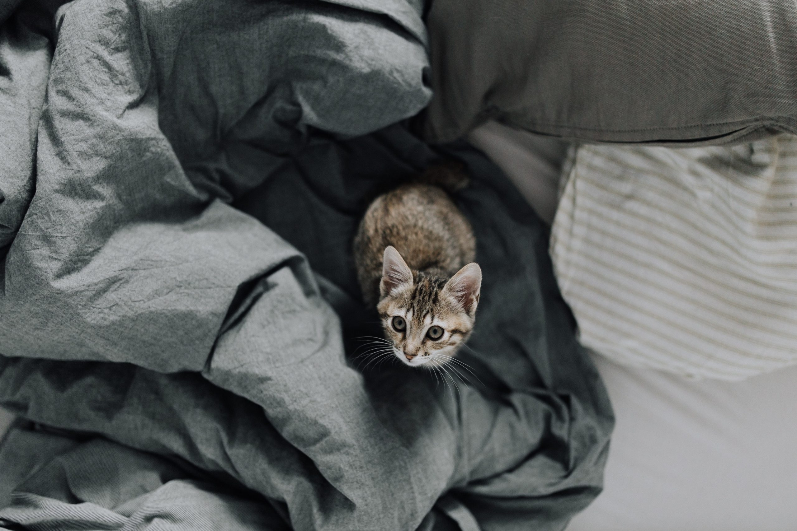 5 Things That Only Those Knows Who Live With a Cat