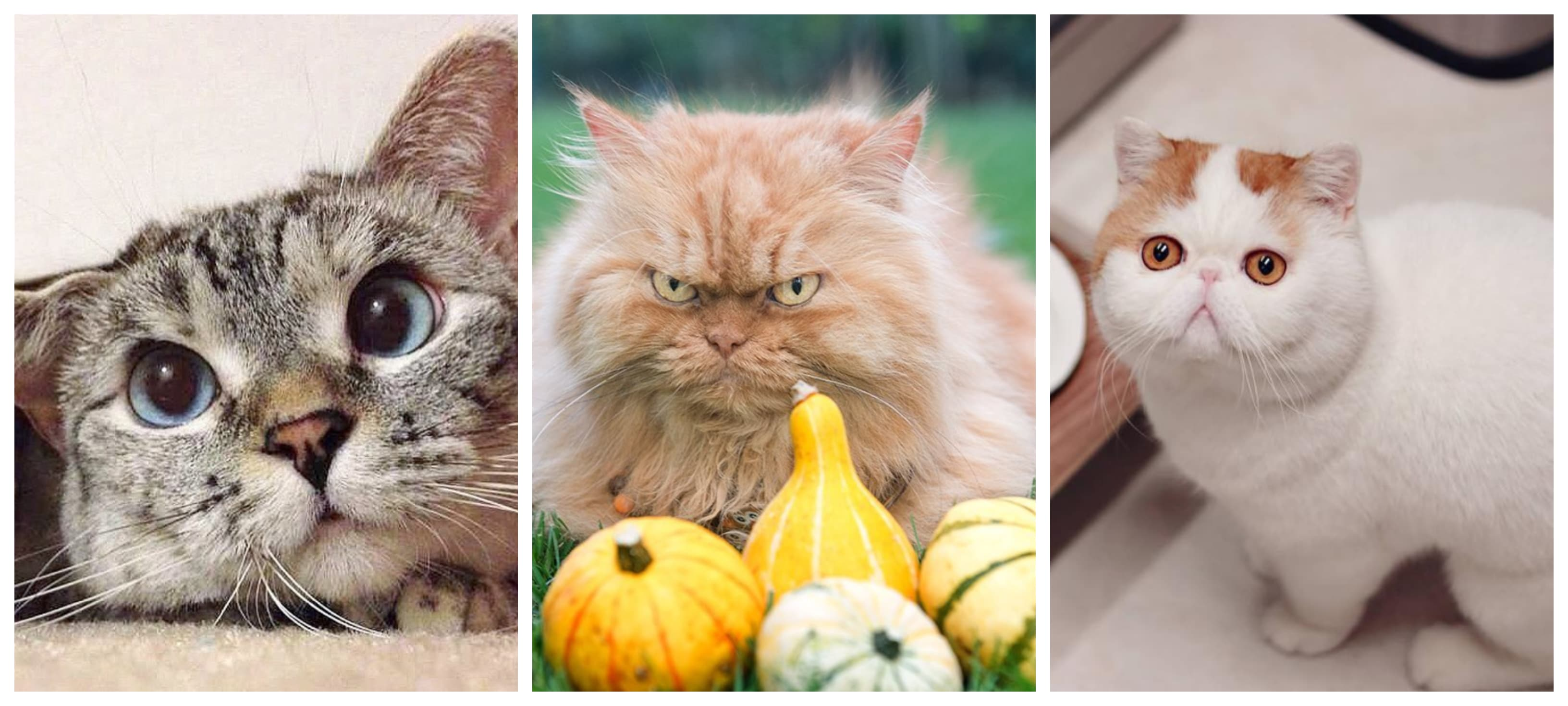 The 10 Cat Accounts That You Can Not Miss in Instagram