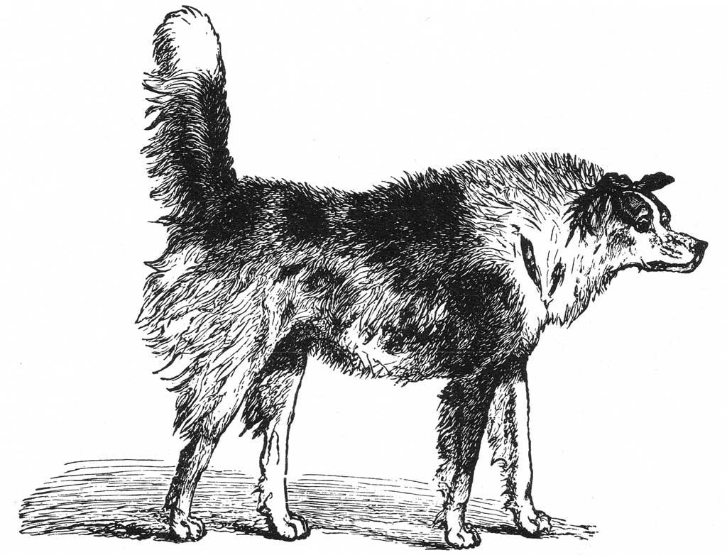 Canine dominance, new methods of evaluation.