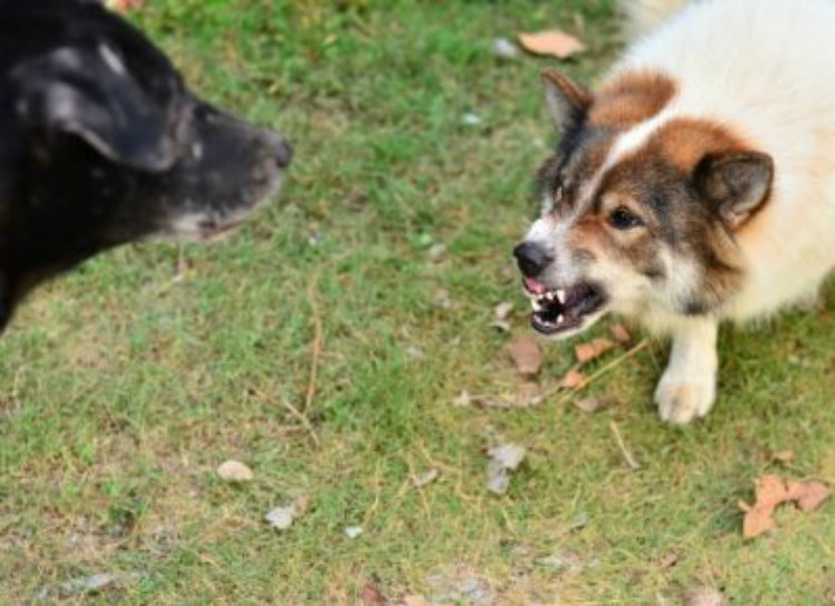 Does your dog have rabies? It is hard but not impossible