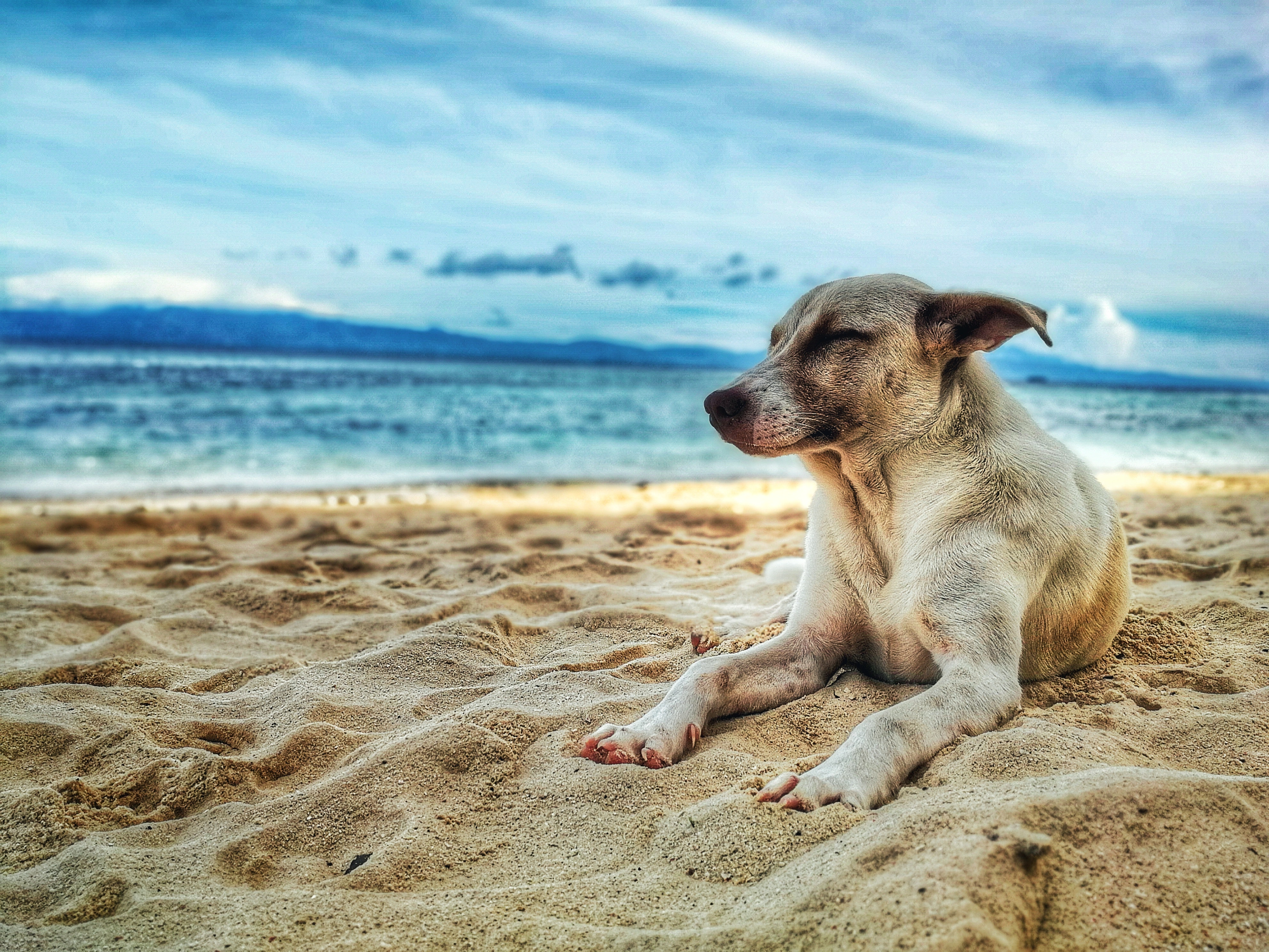 Holidays With my Dog, 10 Places to Stay