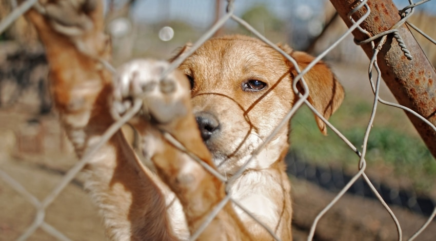 How to detect cough in kennels
