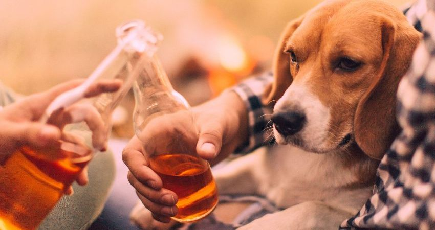 Enjoy a Delicious Cold Pint With This Dog Beer!