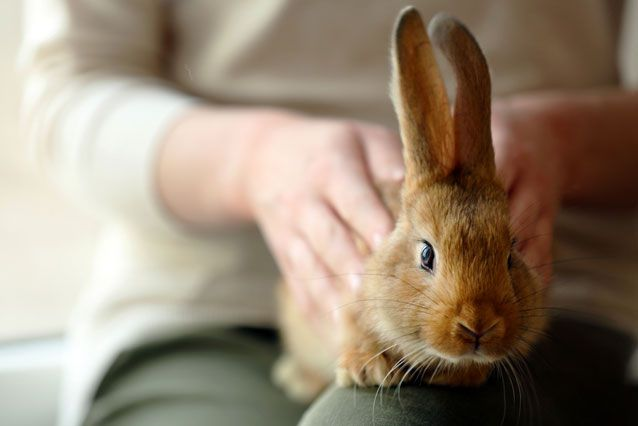How to care for a rabbit at home so that it is a happy and healthy pet