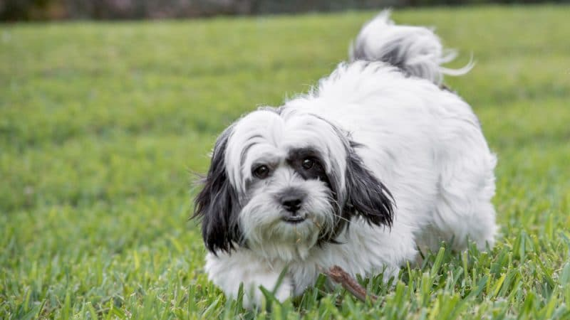 Small Dogs For Adoption: a Perfect Choice