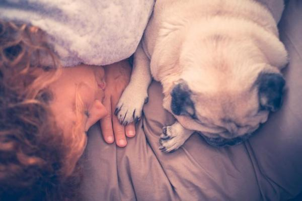 Do you know why your dog sleeps with you? Benefits and curiosities