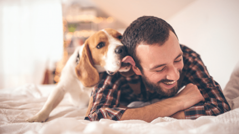 Do you know why your dog licks you?