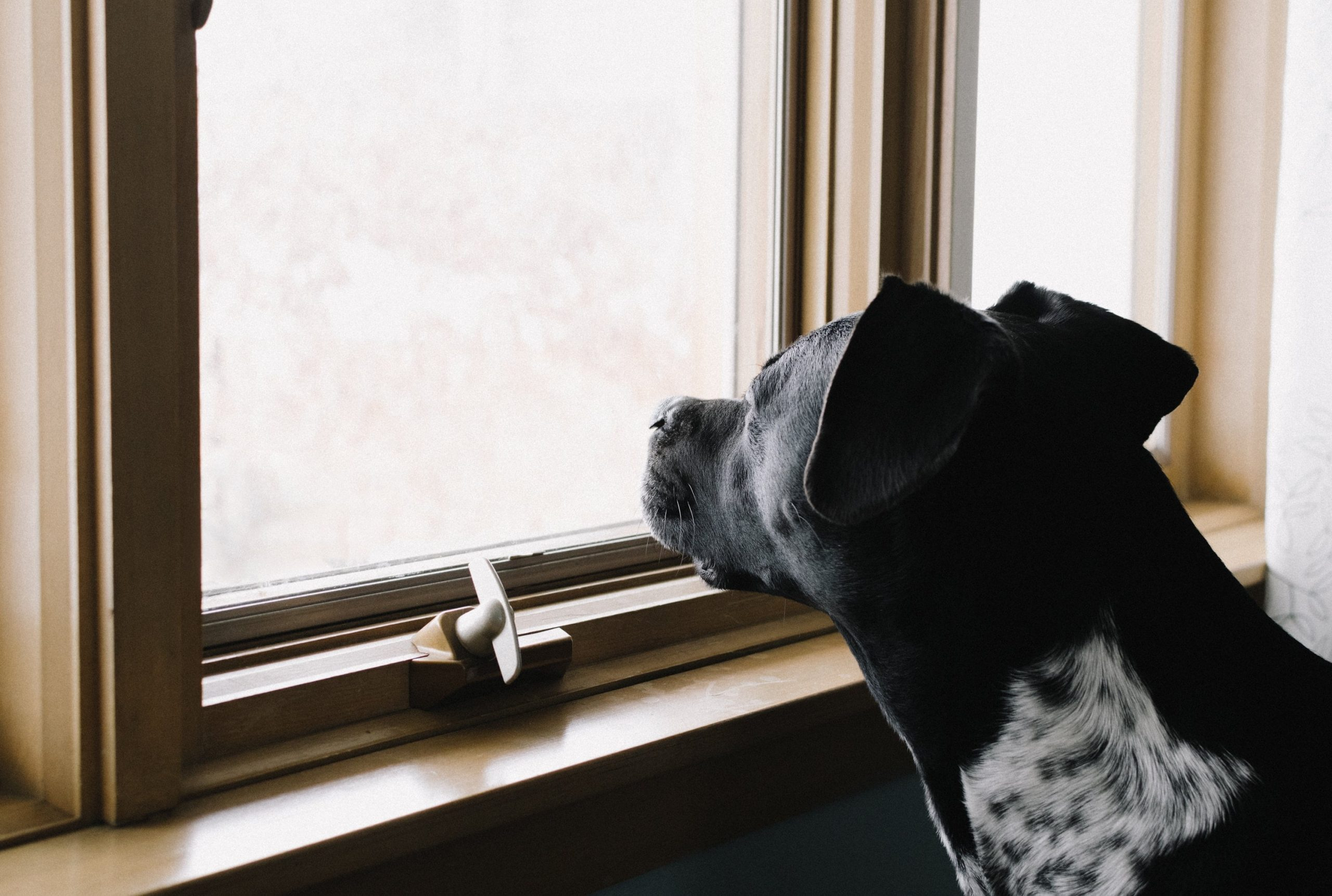 How Long Can I Leave my Dog ​​alone?