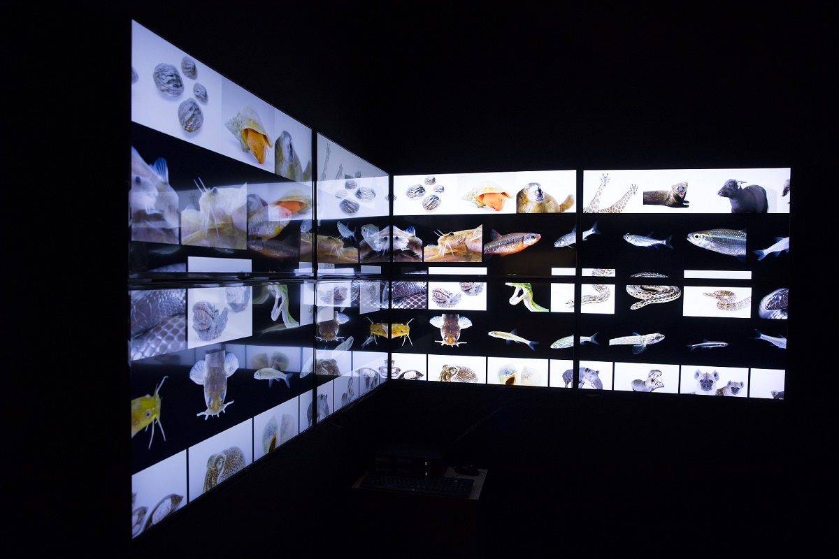 "LG collaborates with the exhibition ""Photo Ark"" on the extinction of the species"