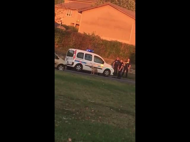 The Video of The Dog Shot by The Police in Grenoble Unworthy of All France