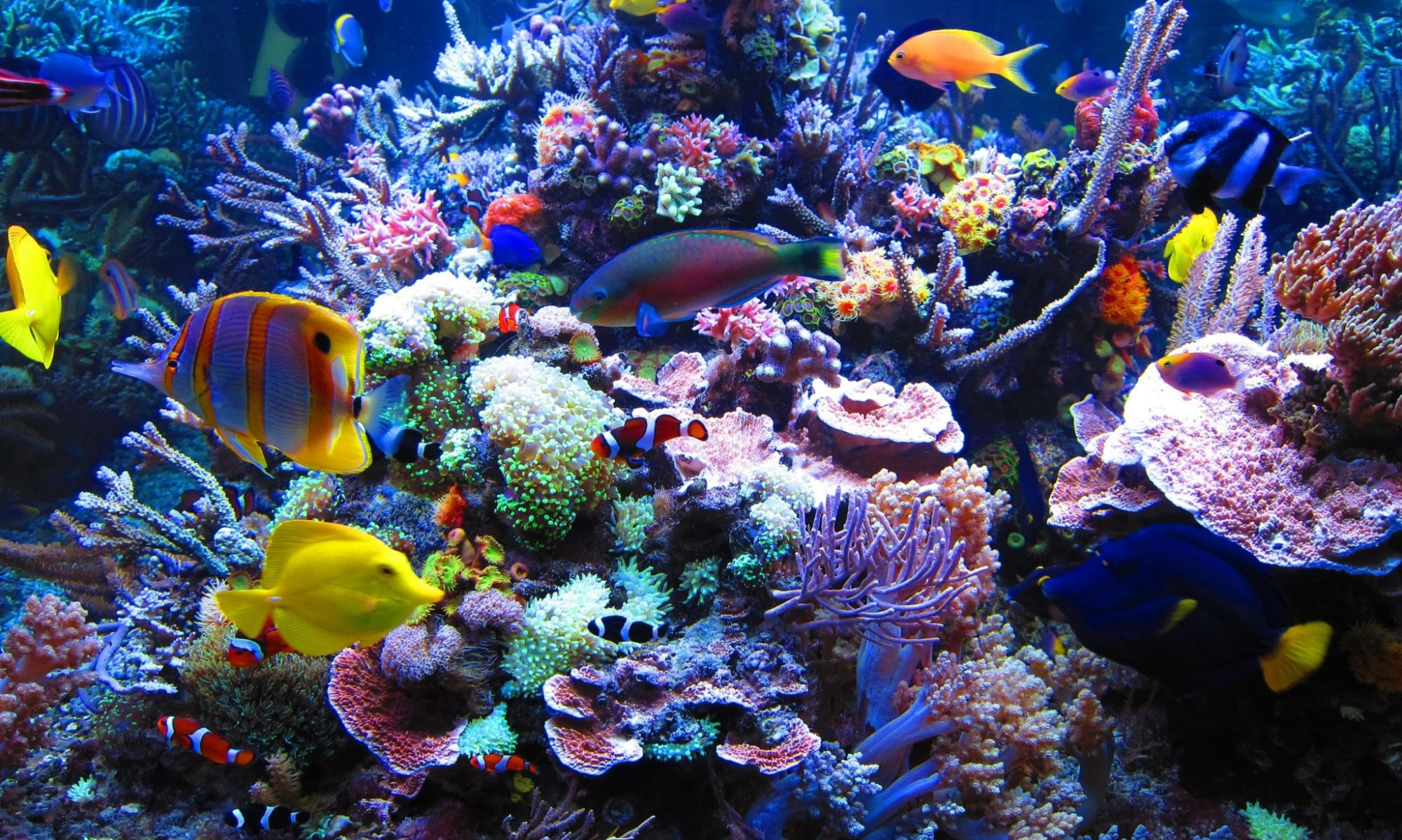 7 Steps to Start an Aquarium