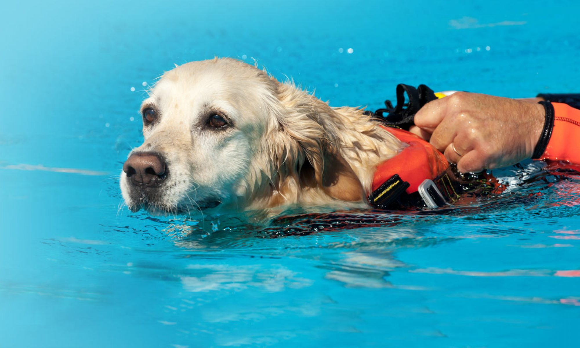Hydrotherapy in Dogs