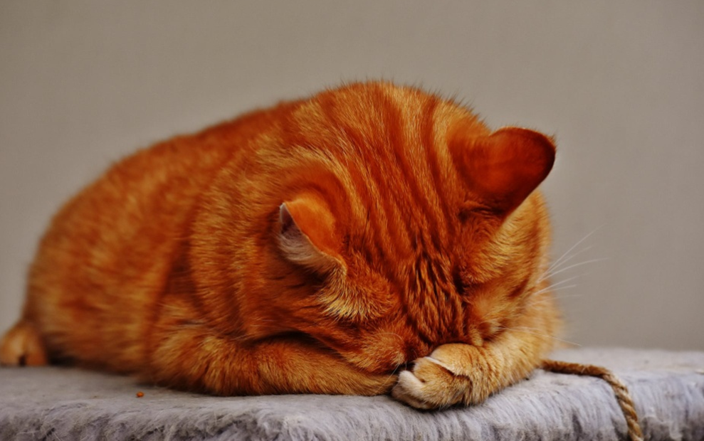 Urinary Crystals in Cats: Treatment Options