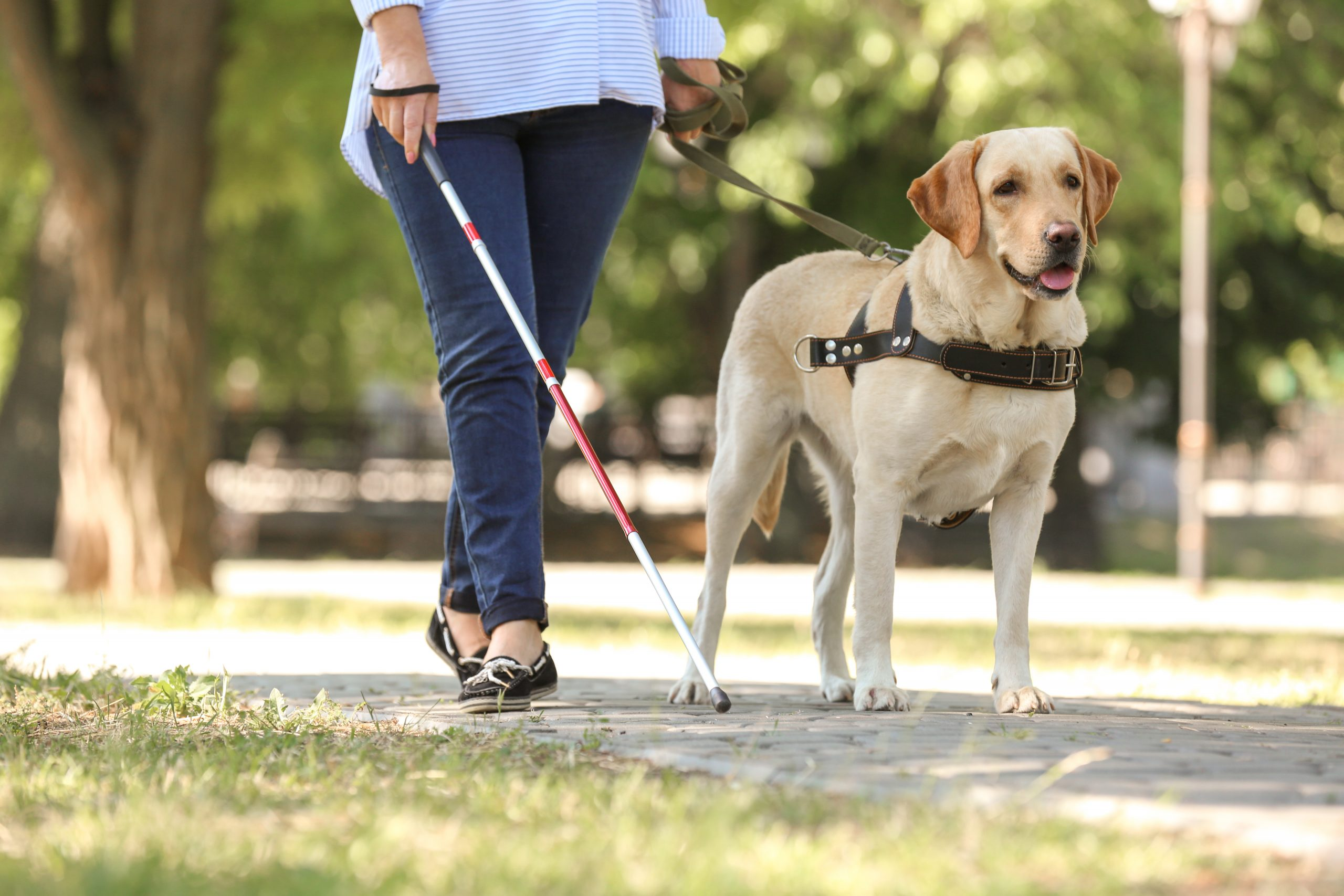 Service Dogs & Housing – Know Your Rights