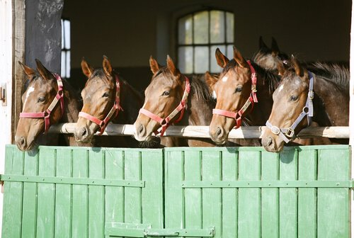Should Horses be Left Inside or Outside the Field Shelters?