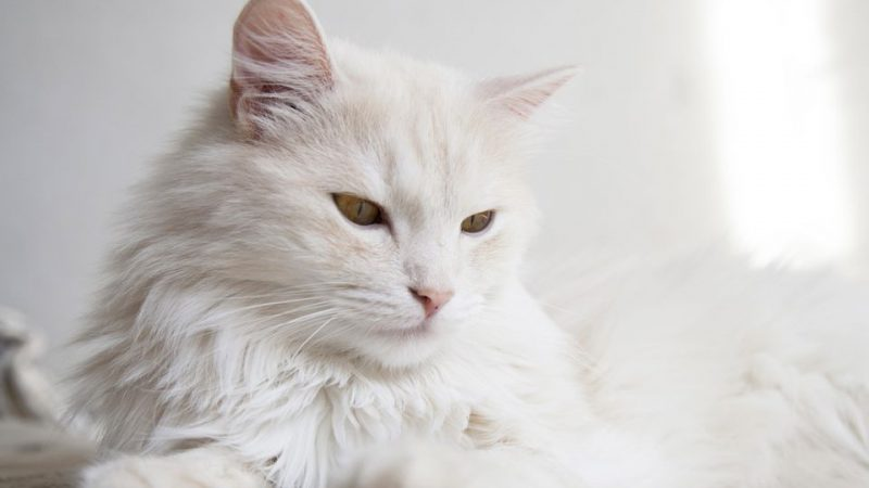 The Fur of The Cats. Tips, Advice And Much More